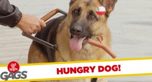 Guide Dog Betrays Blind Man for Food Prank!
