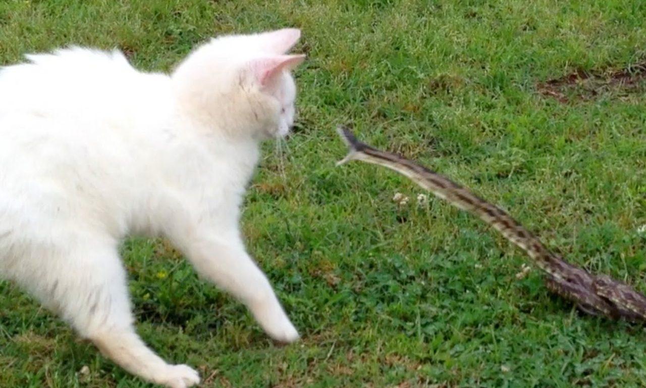 Cat Eating Vegetable